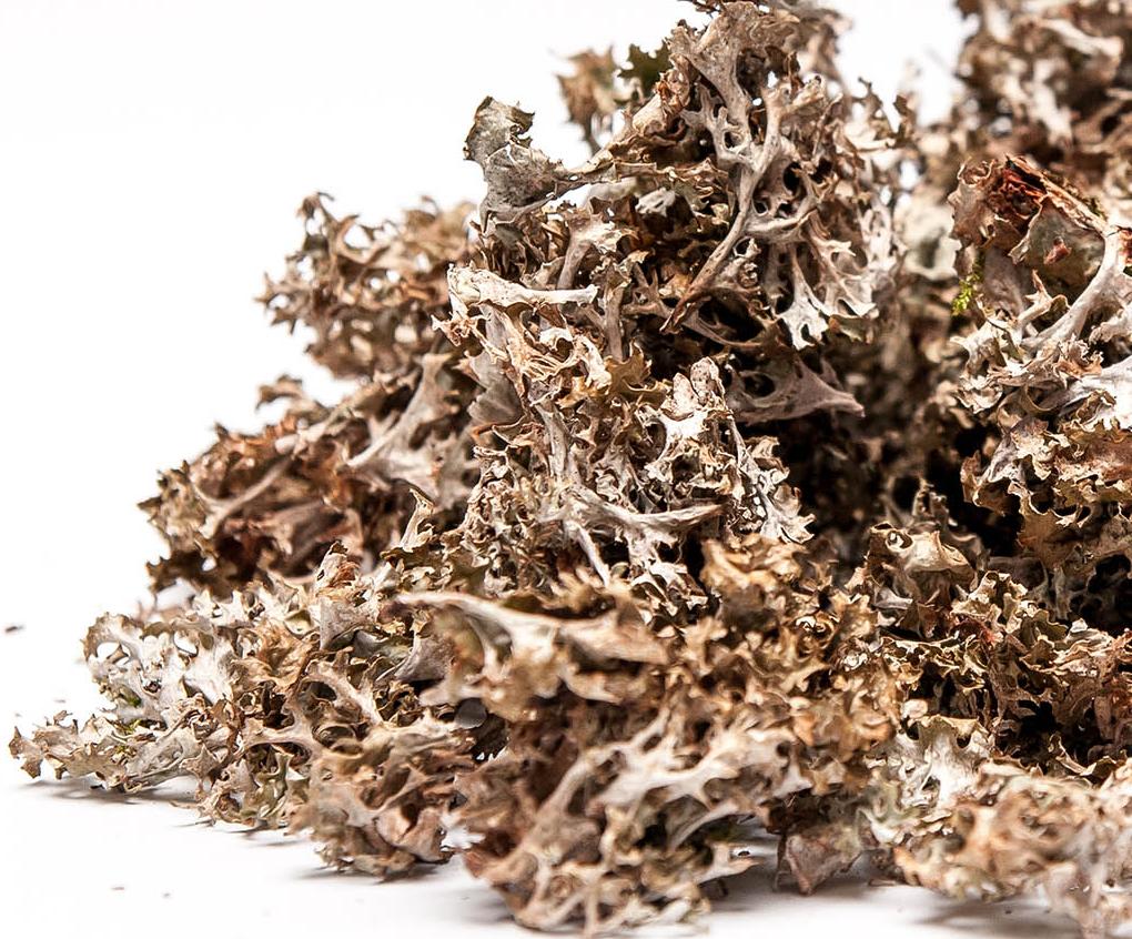 Рецепт как применять исландский мох от кашля