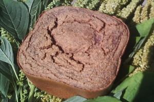 Тесто из амаранта