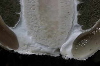 Гриб веселка — фото, описание, лечебные свойства и вред